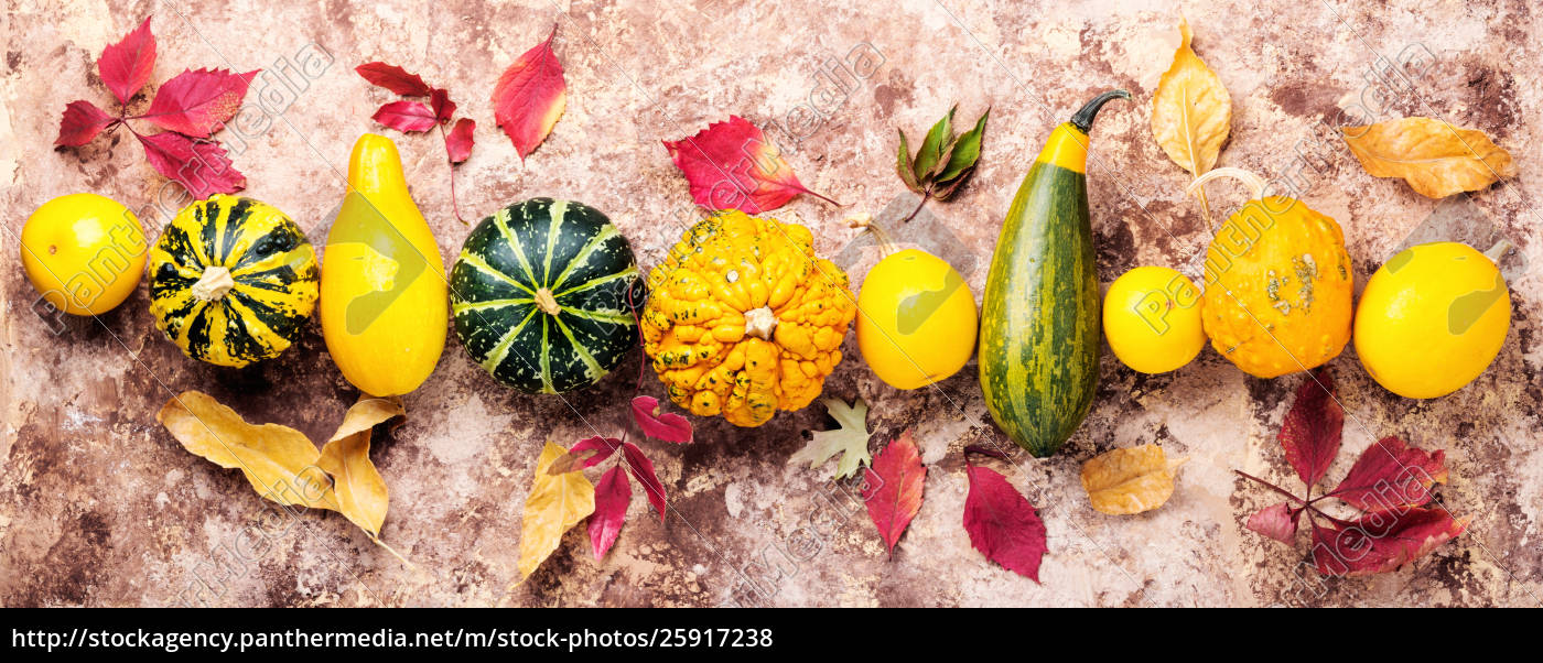 Herbsternte Kurbis Stock Photo 25917238 Bildagentur Panthermedia