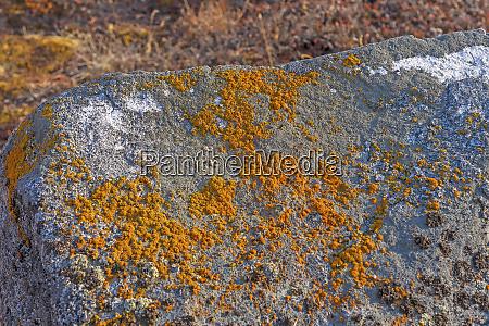 bunte lichen auf bare rock in