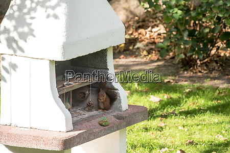 feeding, ground, for, birds, and, squirrels - 25926820