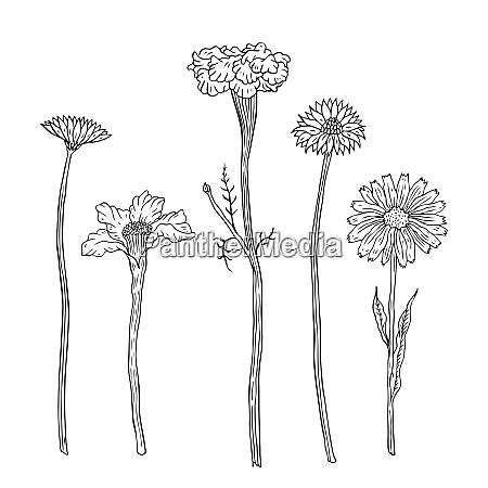 handgezeichnete blumen und pflanzen