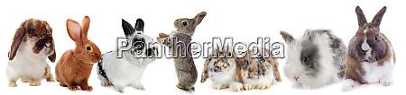 gruppe von kaninchen