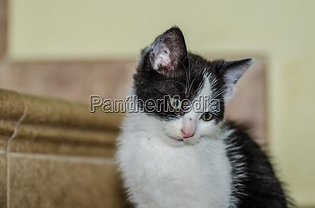 kleine schwarz weisse katze