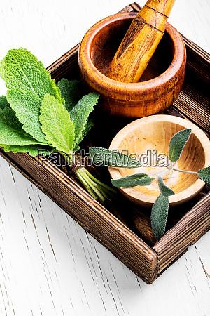 natural medicine herbs