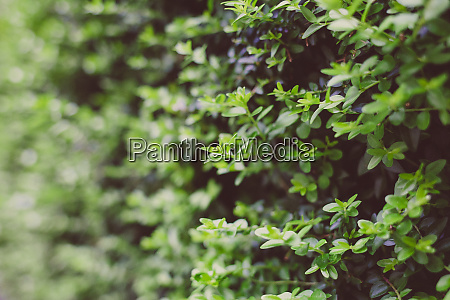 green leaves background green leaf pattern