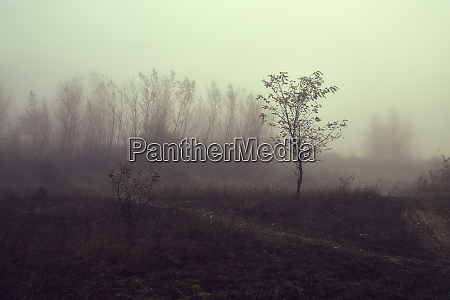 haunting foggy landscape