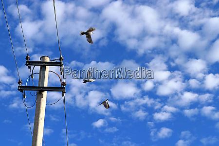 drei tauben fliegen von einem strommast