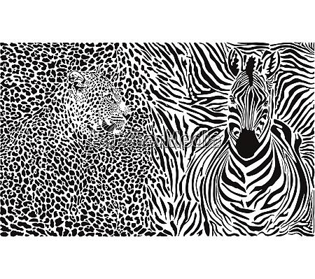 leopard und zebra und musterhintergrund