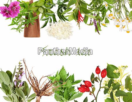 collection of fresh tea plants