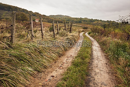 dirtroad in the countryside