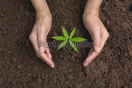 hand protecting a green young plant