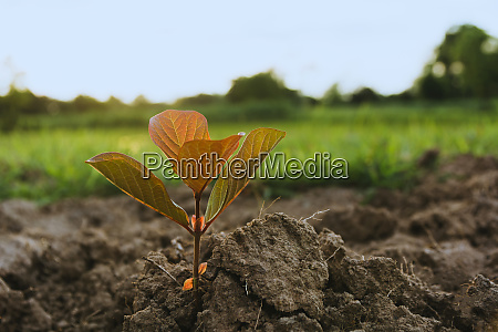green young plant growing in soil