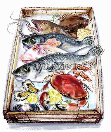 die vielfalt der fische und meeresfruechte