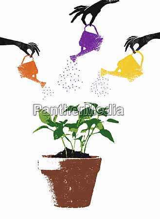 hands with watering cans watering seedling