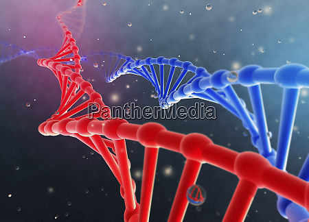 blue and red double helix