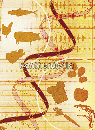 collage of animals food and dna
