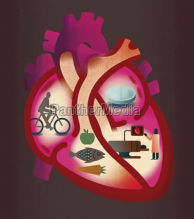 cross section of heart contrasting heart
