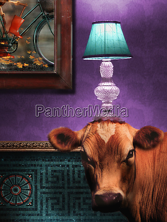cow in living room with lamp