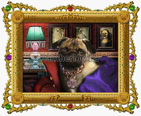 ornites portraet des hundes in glamouroeser