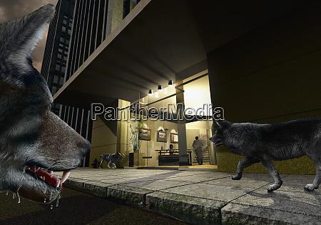 hungry wolves circling urban lobby
