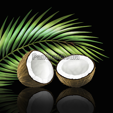 coconut in two halves with coconut