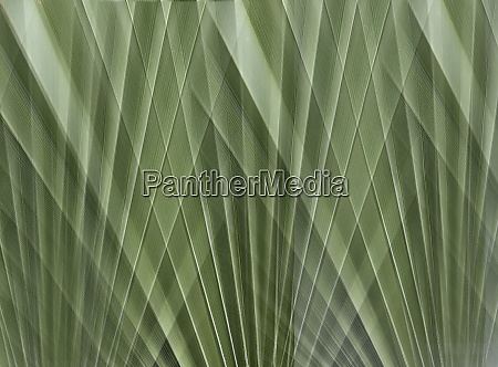 abstract backgrounds pattern overlapping green fan