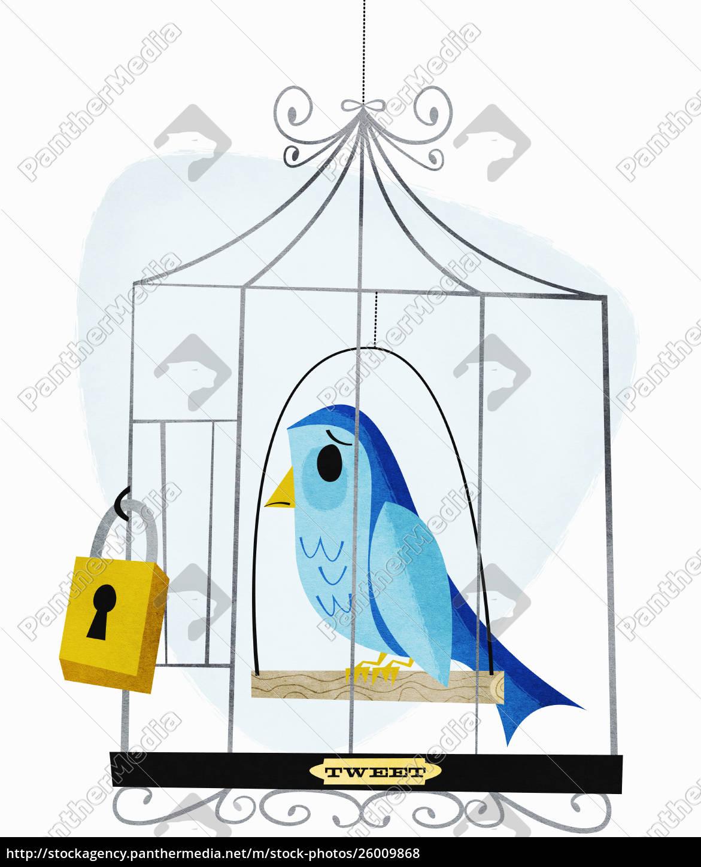 vorhängeschloss, auf, vogelkäfig, mit, etikett, tweet - 26009868