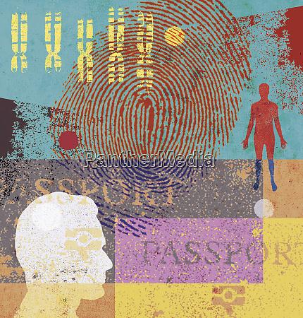 mensch chromosomen fingerabdruck und reisepass
