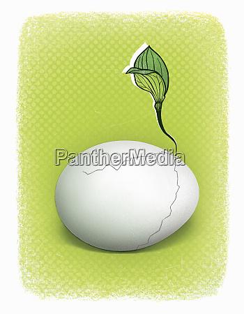 saatgut waechst aus geknacktem ei