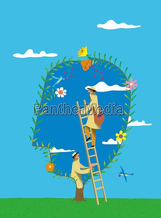 man on ladder harvesting fruit from