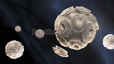 illustration, von, emiliania, huxleyi, phytoplankton - 26012564