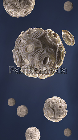 illustration, von, emiliania, huxleyi, phytoplankton - 26012577