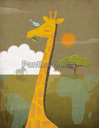 giraffe in der afrikanischen savanne mit
