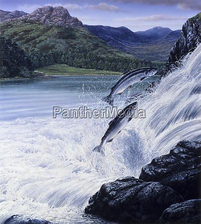 lachs springt wasserfall in zerkluefteter landschaft