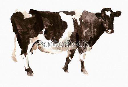 aquarellmalerei der shetland kuh