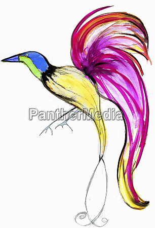 bright colorful bird of paradise