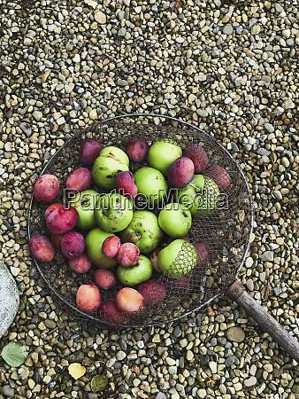 net of fresh fruit