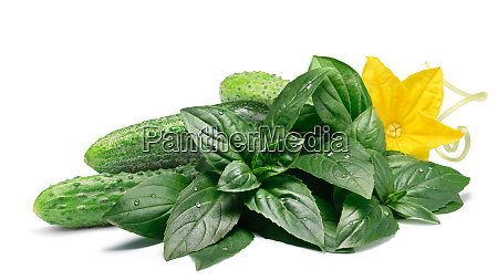 cucumbers with fresh basil paths