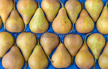 pears on a blue background