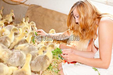kleine ducklinge
