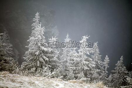 bäume, mit, raureif, und, schnee, in - 26052416