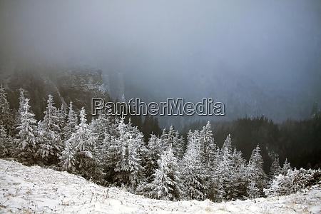 bäume, mit, raureif, und, schnee, in - 26052426
