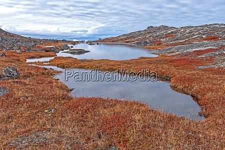 tundra teiche in der hocharktis