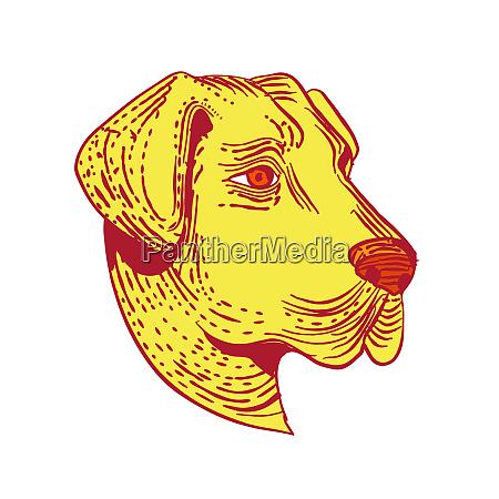 anatolischer schaeferhund hundekopf radierung farbe