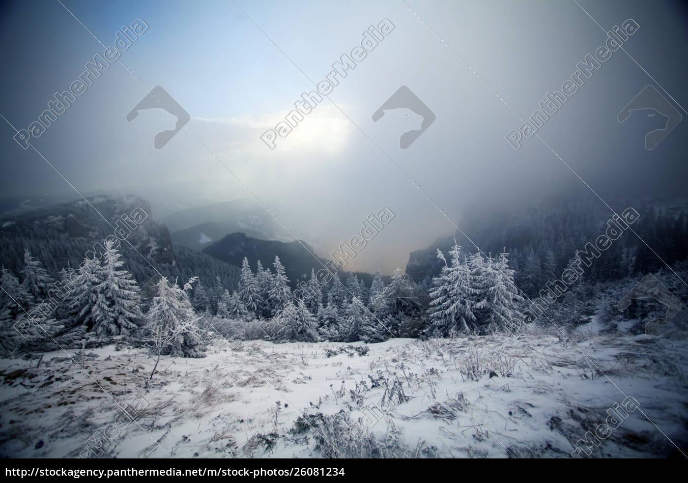 bäume, mit, raureif, und, schnee, in - 26081234