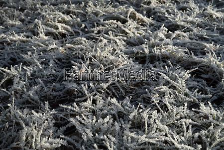 tiefer bedeckt mit prickelndem hosenfrost im