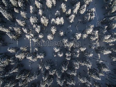 luftaufnahme, des, winterwaldes, -, schneebedeckte, bäume - 26111002