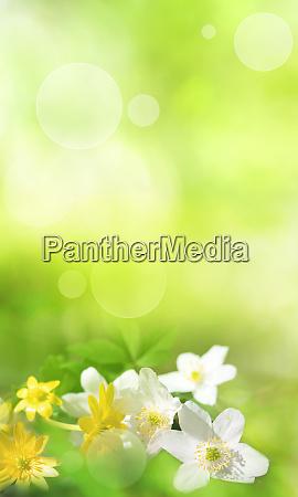 fruehlingsblumen im gruenen hintergrund