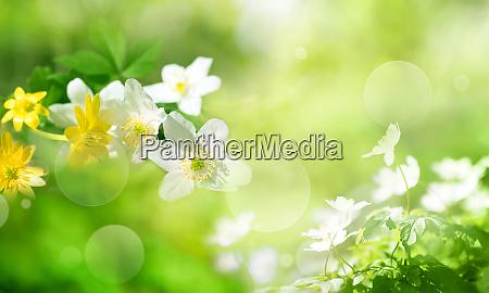 blumen im fruehling auf sonnigem gruenen