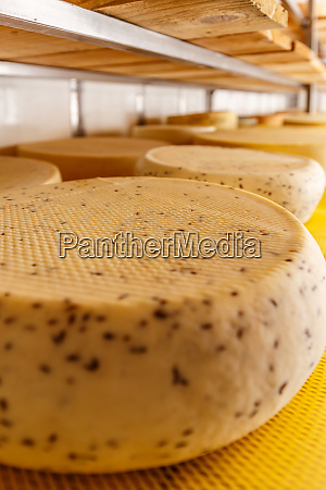 close up of cheese wheels