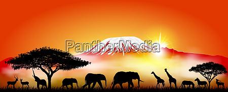 savanna tiere auf dem hintergrund des